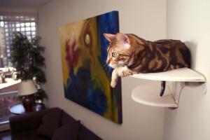 wall wounted cat shelf refined feline