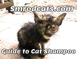 Cat Shampoo Guide