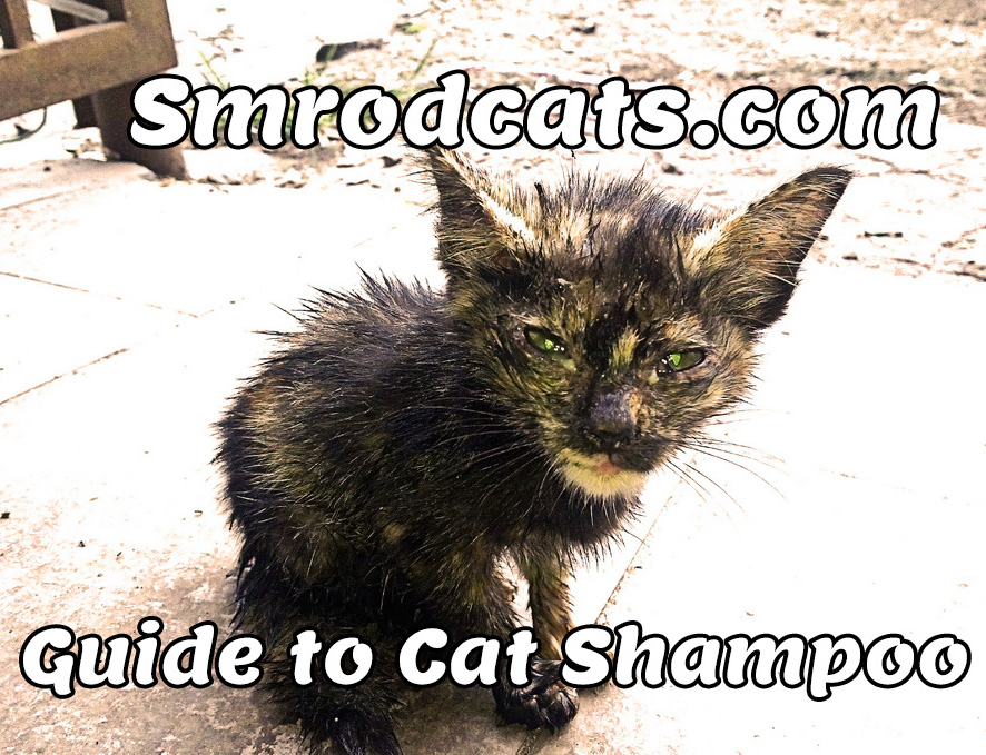 how to help cat dandruff