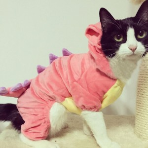 Check it out: www.smrodcats.com/apparel/costumes-for-cats/#dinosaur
