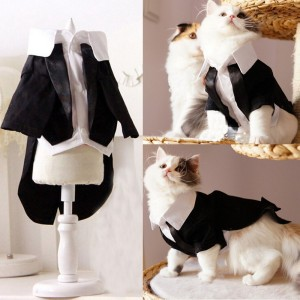 Cat Tuxedo: Check it out: www.smrodcats.com/apparel/costumes-for-cats/#groom