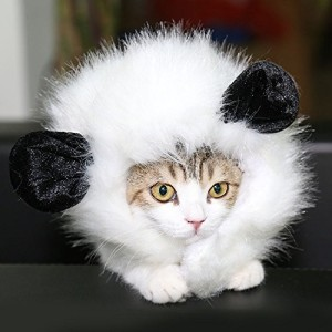 Check it out: www.smrodcats.com/apparel/costumes-for-cats/#panda