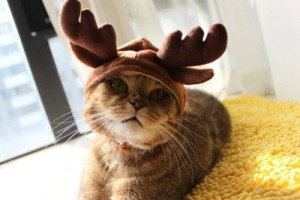 Moose Horn costume for your kitty cat. Check it out: www.smrodcats.com/apparel/costumes-for-cats/#moosehorns