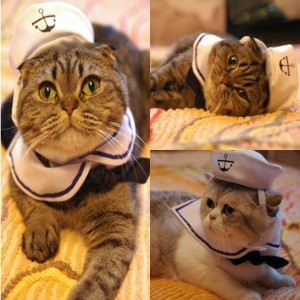 http://smrodcats.com/apparel/costumes-for-cats/#namsan