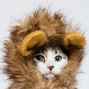Lion Mane Costume for Cats. Check it out: www.smrodcats.com/apparel/costumes-for-cats/#lionmane
