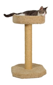 Half Carpet Half Sisal Tall Post for your kitten to scratch at, and lie on. Molly and Friends is a very popular options with an average user rating of 4.7 out of 5 on Amazon.