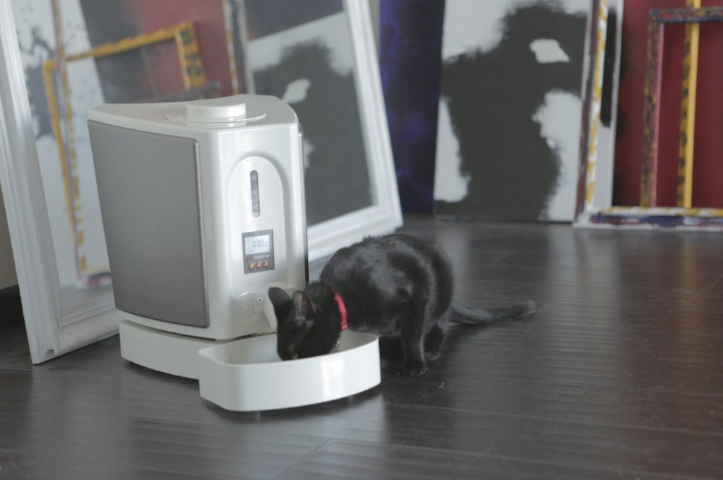 dogs and kittens food dispenser
