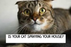 stop-cat-spraying-urine
