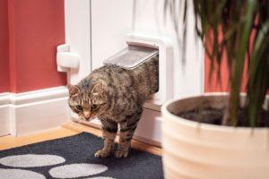 Cat Flap Garage Door SureFlap Microchip Review